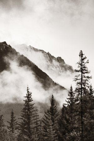 Banff national park foggy mountains and forest in Canada. Banco de Imagens