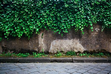 Wall with plant in Florence Italy 스톡 콘텐츠 - 127361103