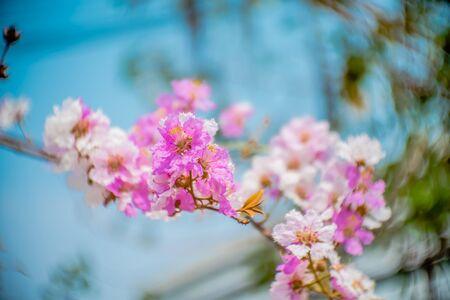 bloom: pink bloom Stock Photo