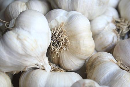 Set of Garlic closeup photo