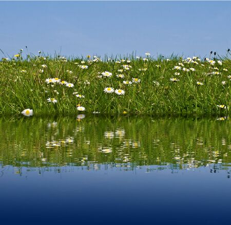 Meadow grass and flowers with water reflection against a clear blue sky photo