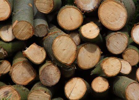 Pile of sawn logs showing wood grain