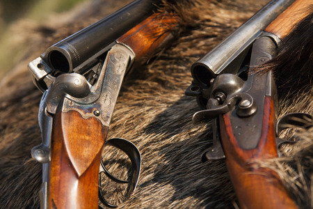 two hunting rifles on the skin of wild boar