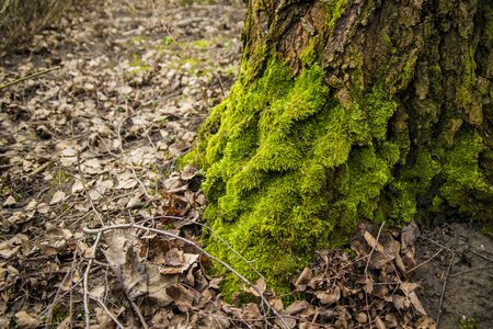 Moss in the garten