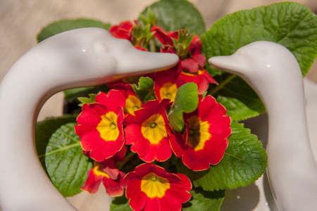 Spring  red flowers Reklamní fotografie