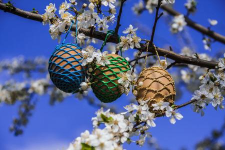Eggs in a tree Reklamní fotografie