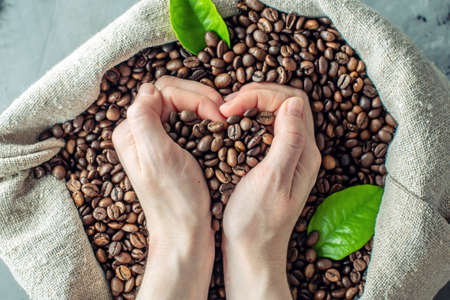Hands hold a handful of heart-shaped roasted coffee beans over a full burlap of coffee. The view from the top. ?oncept of love for coffee.