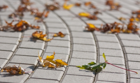 stale: stale leaves on the ground