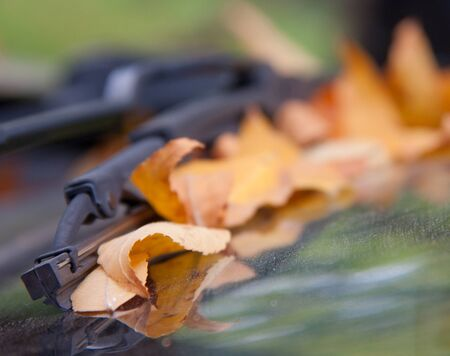 stale: stale leaves on the car