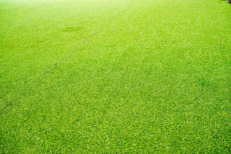 Beautiful green artificial grass background. texture, green, background, Stock Photo