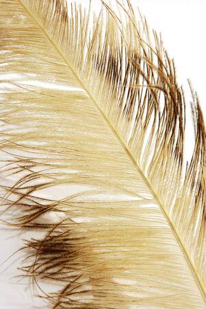 ostrich feather texture
