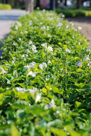 hedging: Green hedge