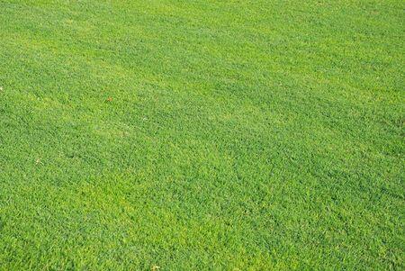 sunlighted green grass Stock Photo