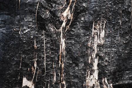 Burned tree texture