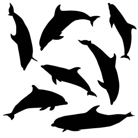 Dolphin. Seven different black and white