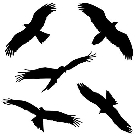 Eagle. Five different black and white  Vector
