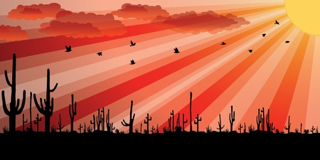 Sunset with Saguaro Cactus. Vektorové ilustrace