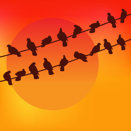 Pigeons on wire against the sunset.