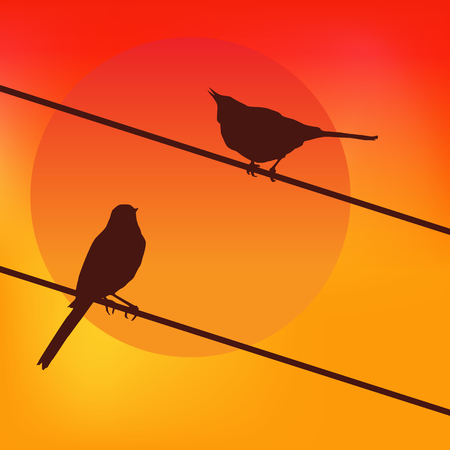 Two birds on the background of the sunset.