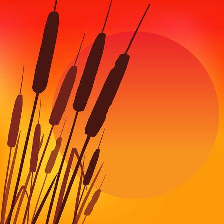 Hot Summer Sunset background.
