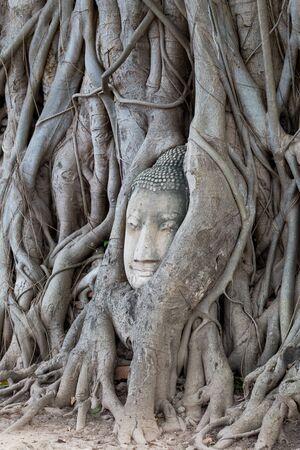 cabeza de buda: la cabeza de Buda en madera de raíz