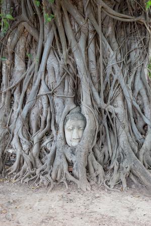 cabeza de buda: la cabeza de Buda en madera de ra�z