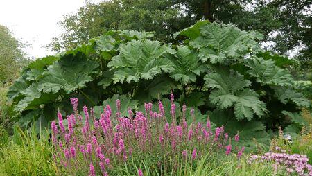 oxford: Oxford English Gardens Stock Photo