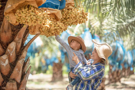 Young mother Asian farmer holding little daughter helping collect date palm. Mother teach daughter to work and enjoy life. Child excited working with mother. Stock Photo