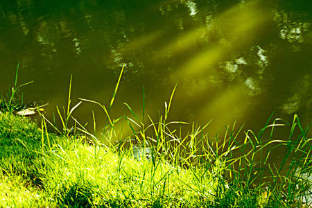 contorted: Light of sun on the grass.