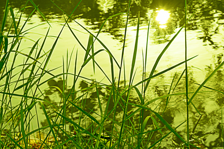contorted: Reflection of Sun on the water.