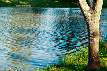 contorted: Shadow trees reflected in water. Stock Photo