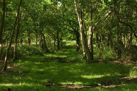 the glade: Woodland glade
