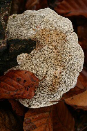 bracket: Bracket fungus