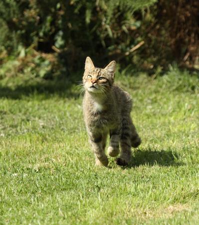 elusive: Scottish wildcat Stock Photo