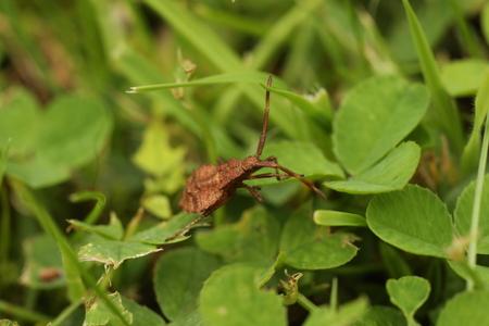 Dock bug Stock Photo