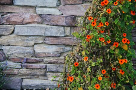 Rock Wall with Flower Vine