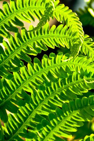 Green Fern in the Sun Stock Photo