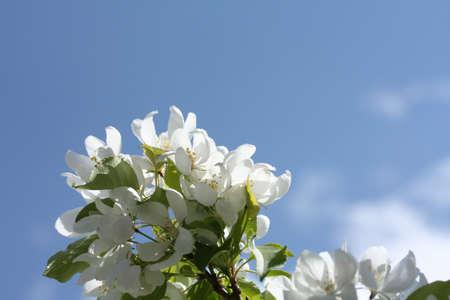 사과 꽃 지점 스톡 콘텐츠