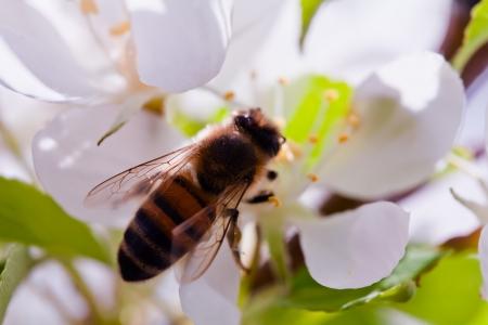 Bumblebee Close up Stock Photo