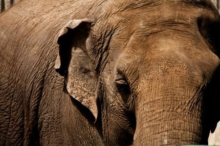 Elephant Up Close Фото со стока