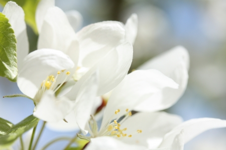 Happy Blossoms Фото со стока