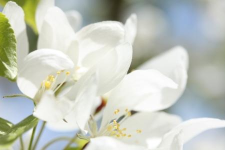 Happy Blossoms Stock Photo