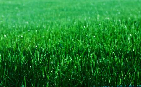반짝이는 물방울과 녹색 잔디