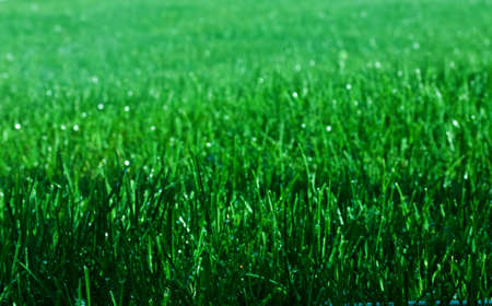 Green grass with sparkling water droplets photo
