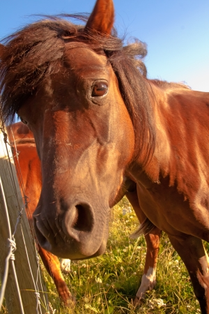 an up close view of a horse Stock Photo
