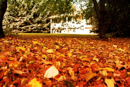 a white house with golden leaves in the yard Stock Photo - 15703668