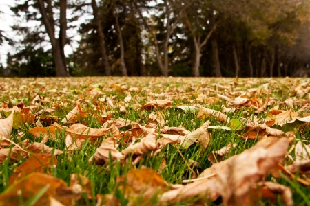 Dry autumn leaves on the green grass Stock Photo