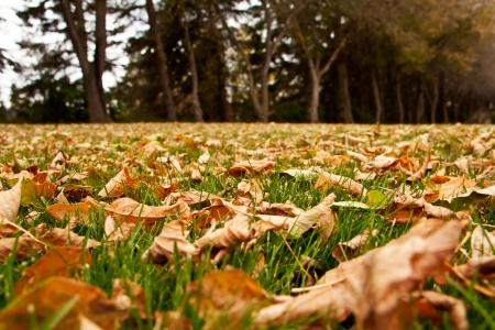 Dry autumn leaves on the green grass Фото со стока