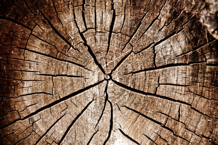 a cross section of a log, close up