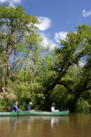 Canoeing on the water surrounded by green trees photo